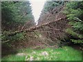 NY6672 : Fallen tree blocking the firebreak in the plantation on Tip Hill by Mike Quinn