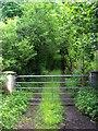 G9684 : Green Lane by louise price