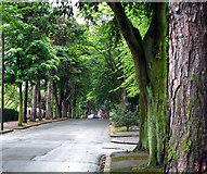 J3773 : Cyprus Avenue, Belfast by Rossographer