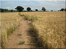 SO7729 : Footpath to Staunton by Philip Halling