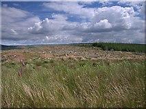SN7950 : Dalarwen top by Rudi Winter