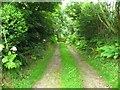 SN0824 : Leafy lane to Gilfach Uchaf by Shaun Butler