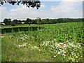 TG0722 : View across sugar beet field by Evelyn Simak
