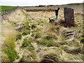 NU0131 : Doddington Moor Stone Circle by Ewen Rennie