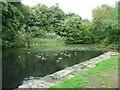 SJ9993 : Broad Mills Pond by Gerald England
