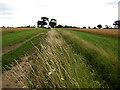TF9106 : Plenty of space between crops by Zorba the Geek