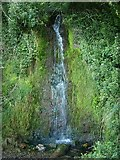 SX9265 : Waterfall, Babbacombe by Derek Harper
