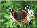 TF8745 : Red Admiral butterfly by Zorba the Geek