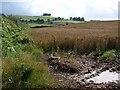 SX8260 : Field of wheat near True Street by Derek Harper