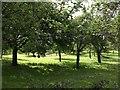 SX8261 : Orchard, Berry Pomeroy by Derek Harper