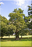 TQ2992 : Large Oak Tree by footpath in Arnos Park, London N14 by Christine Matthews