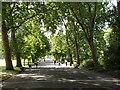 TQ2883 : Trees shade Regent's Park Broad Walk by David Hawgood