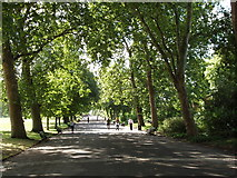 TQ2883 : Trees shade Regent's Park Broad Walk by David Hawgood