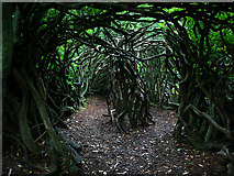 NU0702 : Entrance to the labyrinth, Cragside Estate by Chris Gunns