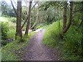NZ4118 : Footpath through the trees by Ian Barton
