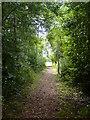 NZ4420 : Path through the trees by Ian Barton