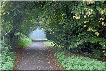 SD6205 : Borsdane Wood by Dave Green