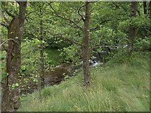 SN7649 : Woodland by the Afon Doethie by Rudi Winter