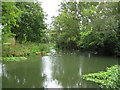 TQ1466 : River Ember near Weston Green by Nigel Cox