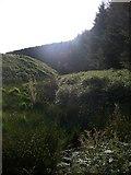 SN7748 : Dalarwen Forest edge by Rudi Winter