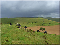 SU0664 : Downland. Bishops Cannings by Andrew Smith