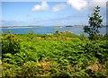 SV9212 : Isles of Scilly, Tree Scheme, Innisidgen, St. Mary's by Bob Embleton