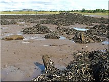 NS4173 : Dumbuck Crannog - remains of timber piles (north-east) by Lairich Rig