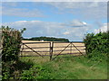 SS9673 : Ready for harvesting near Llysworney by Mick Lobb