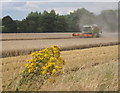 TM1550 : Harvesting in progress by Andrew Hill