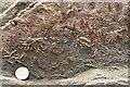 NO5402 : Asterolites by Anne Burgess