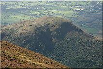 NY2427 : Dodd viewed from Longside Edge by Philip Halling