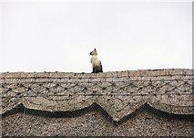 SU7037 : China Cat, Chawton by Pierre Terre