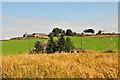 NJ8019 : Craigforthie Farm across cornfield by Greg Morss