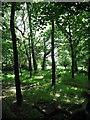 NZ2471 : Woodland within Gosforth Park by Antonia