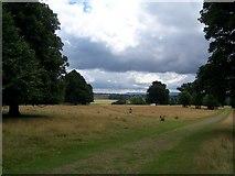 SU9622 : Petworth Park by Pam Goodey