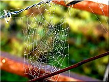 NH9184 : Early morning spider's web by sylvia duckworth