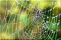 NH9184 : Close up of spider's web by sylvia duckworth