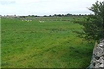 M9239 : Pasture at Ballygatta by Graham Horn