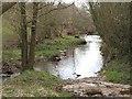 SO5480 : Hopton Brook by Richard Webb