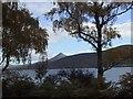 NN6359 : Loch Rannoch through the Trees by Sarah Charlesworth