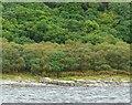 NR9467 : Fence at Asgog Bay by Gordon Brown