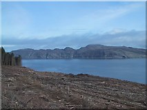 NM4758 : Clear Felling at Bloody Bay by Sarah Charlesworth