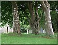 SW9664 : St Wenn Churchyard by Jill Floyd