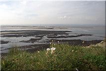 NU1341 : Sea Campion by David Lally