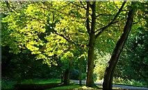 J4681 : Road and trees, Crawfordsburn Country Park by Albert Bridge
