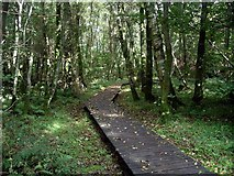 NY0265 : Carr woodland, Caerlaverock by Lynne Kirton