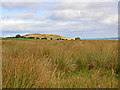 NN9832 : Moorland near Braco by Dr Richard Murray