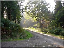 SJ2504 : Forest track, Leighton Park woods by Penny Mayes
