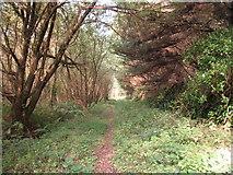 SH5733 : Morfa Harlech Forest by Peter Humphreys