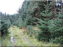 NY5680 : Forest Road  near Shieling Brae by David Liddle